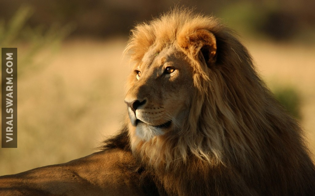 8831657-african-lion-king