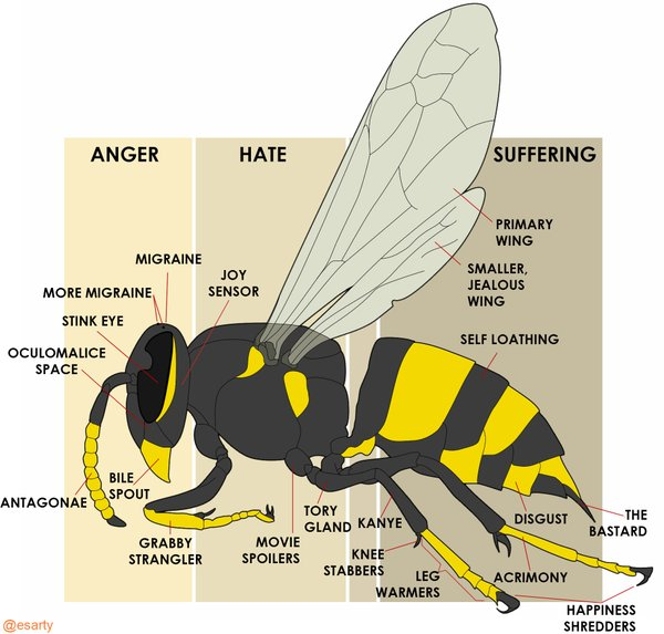 The anatomy of a wasp | ViralSwarm.com